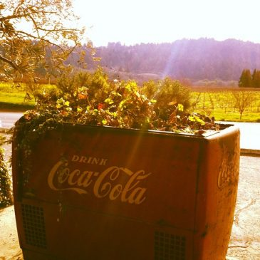 Can Coca Cola grow your garden?