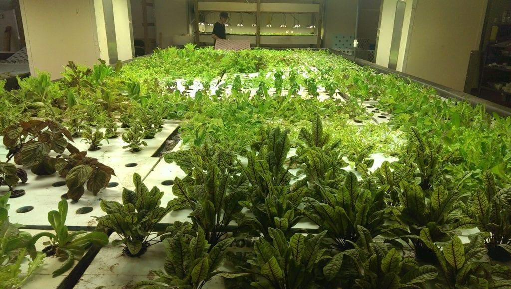 The Plant Aquaponics