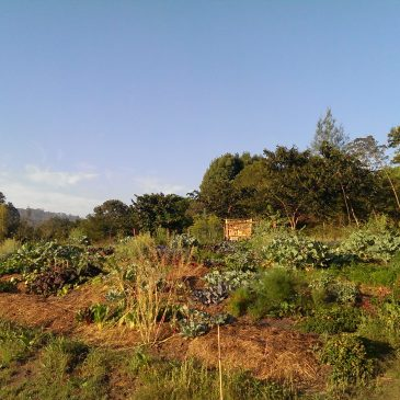 Permaculture Design Course Day 1