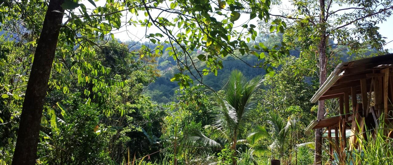 Lush Jungle at VerdeEnergia