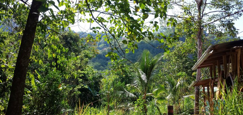 Lush Jungle at VerdeEnergia